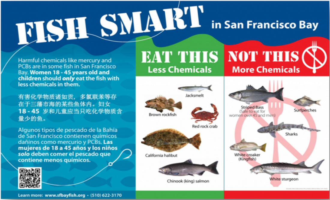 Eating safe fish from the bay and delta for Safest fish to eat 2017