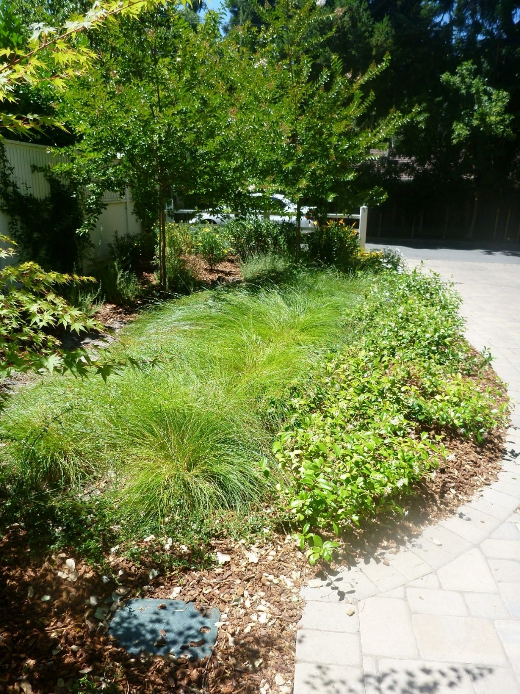 Bioretention treating runoff from residences in a private street in Contra Costa County